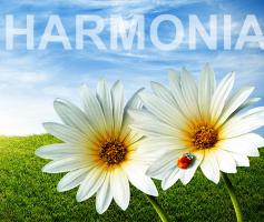 Como Ter Uma Vida Mais Harmoniosa e Mais Feliz